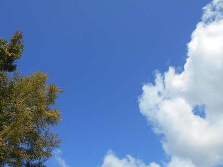 Autumn Sky, Trees and Clouds Stock fotó