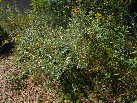 Autumn Asters, Goldenrod and other Wild Plants Banco de Imagens
