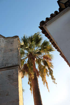 Two roofs in an Andalusian village with palm tree