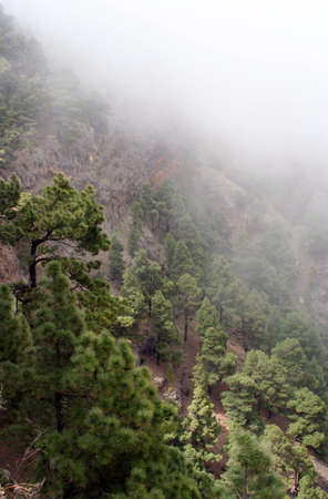Mystic forest in the mist, El Hierro