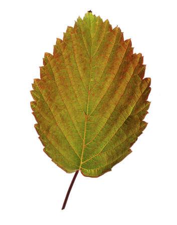 Al-leaves. Archivio Fotografico - 120323817