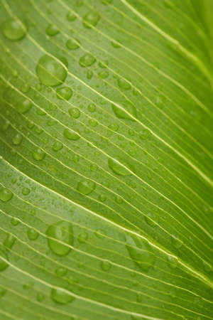 drenched: Macro image of green leaf with rain drops