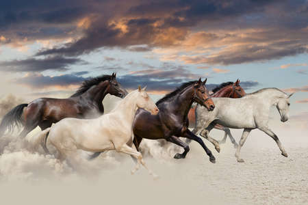 herd: Five horse run gallop in desert at sunset Stock Photo
