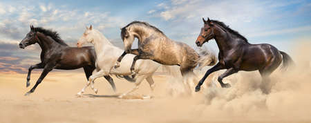 Group of horse run gallop in desert sand