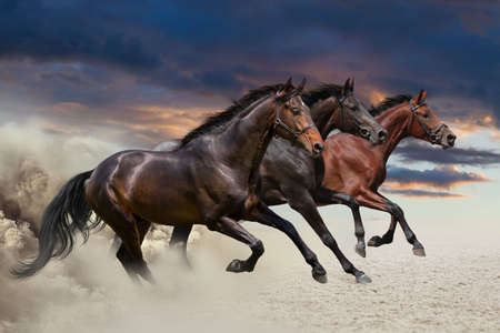 Horses running at a gallop along the sandy field Imagens - 36685821
