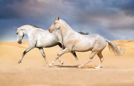 Two horses run on desert against sunset sky