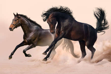Two horses run gallop in dust