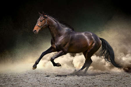horses in the wild: Black horse run gallop in dust desert
