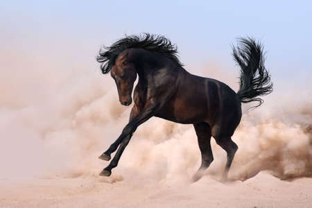 Cute dark horse running in desert sand Фото со стока