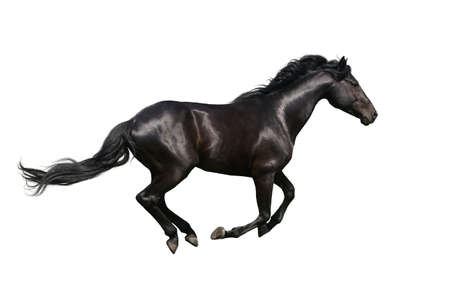 Beautiful horse isolated on white background