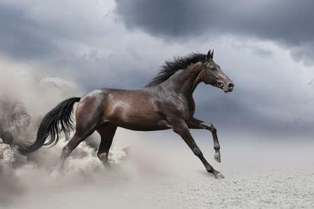 砂漠の馬のギャロップ