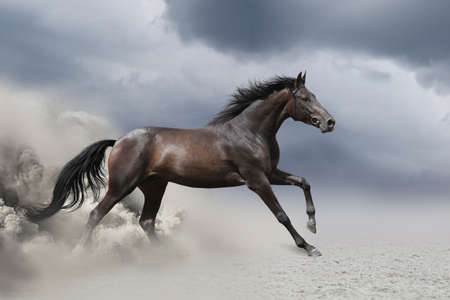 Horse gallop in desert Banque d'images