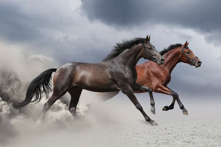 Two horses running at a gallop along the sandy field Foto de archivo