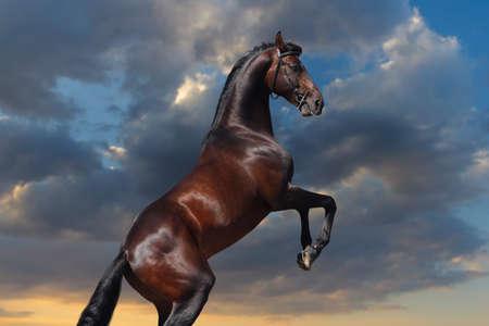 caballo saltando: Bahía grande horserearing contra el cielo del atardecer