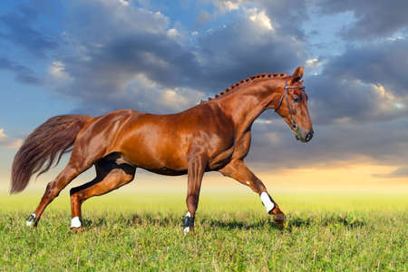 red horse: Red horse galloping