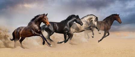 Four beautiful horse run gallop on desert dust