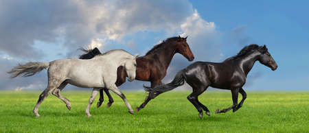 Group of three horse run gallop on gree grass against beautiful sky photo