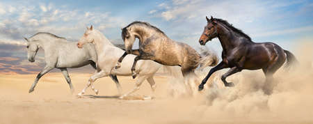akhal teke: Group of horse run gallop in desert sand