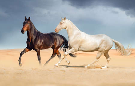Group of two horse run on desert against beautiful sky