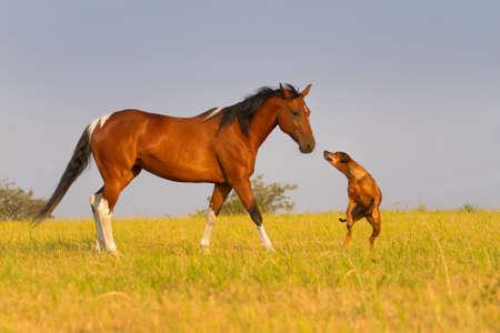 赤馬実行フィールドで犬と一緒に 写真素材