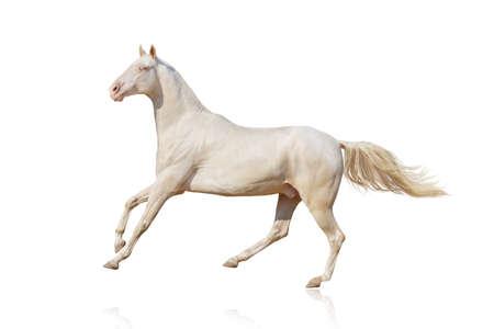 Mooie paard lopen galop op een witte achtergrond