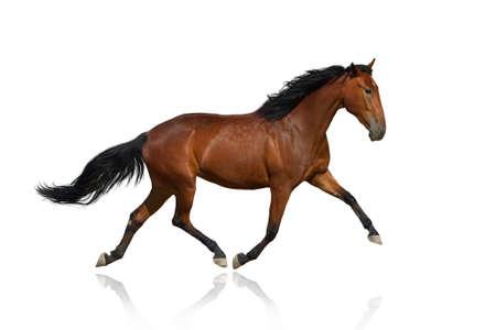 Paard op wit wordt geïsoleerd