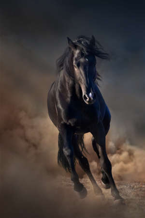 Beautiful black stallion run in desert dust against sunset sky Фото со стока
