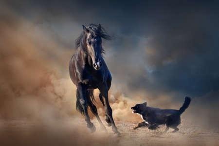 free running: Beautiful black stallion with dog in desert dust against sunset sky