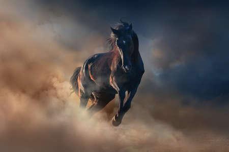 Mooie zwarte hengst lopen in de woestijn stof tegen zonsondergang hemel Stockfoto