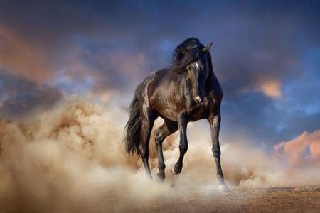 Beautiful black stallion run in desert dust against sunset sky Foto de archivo