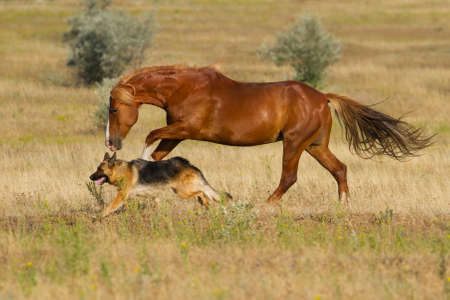 Red horse and dog play in the meadow Imagens