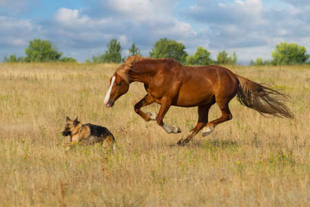 dog run: Horse and dog run Stock Photo