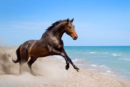 美しい海の海岸に沿って走る馬