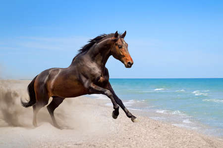 Beautiful horse run along the shore of the sea
