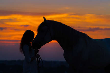 horses in the wild: Beautiful horse with girl silhouette on sunset