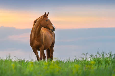 Beautiful red mare on green pasture against sunset sky Imagens - 40402853