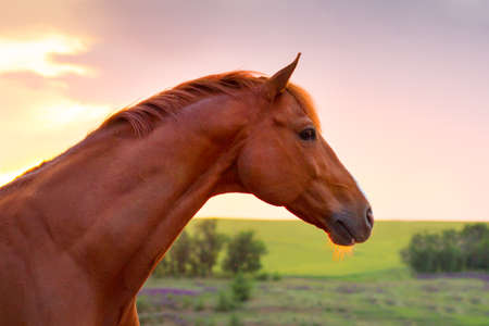 Red stallion  horse against beautiful blue sky