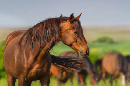Portrait of red horse in herd on spring pasture