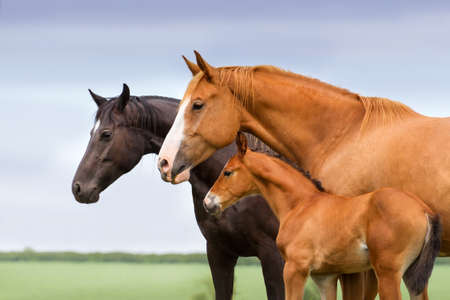 Portrait of two mares and foal at pasture Stockfoto