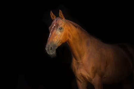 eye shade: Portrait of beautiful red horse isoletad on black background