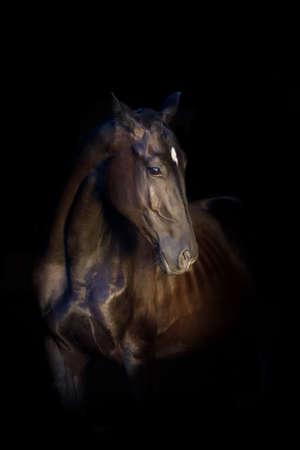 Black stallion portrait isolated on black background Imagens - 43684907