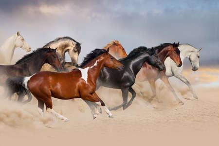 Horse herd run gallop in desert at sunset Banque d'images