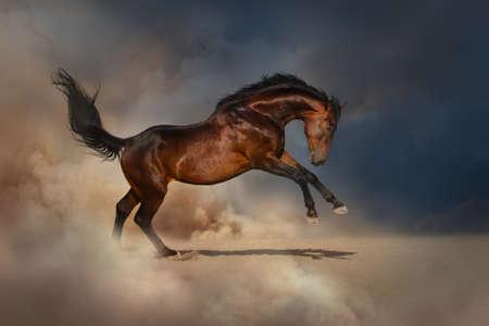 Bay horse in desert dust Stock Photo