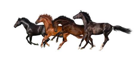 Horses isolated on white background Stockfoto