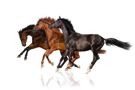 Horses Imagens - 44704408