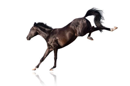 horse jumping: Black stallion play and jump Stock Photo