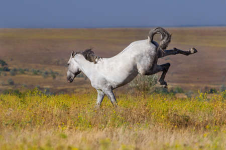 horses in the wild: White horse in motion