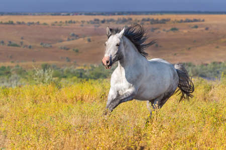 beast ranch: White horse run