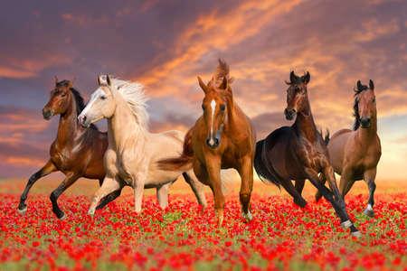 Horse herd Imagens - 44709753