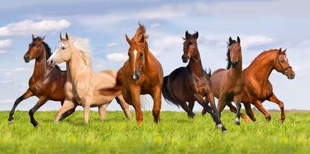 馬の群れが美しい緑の牧草地で実行 写真素材